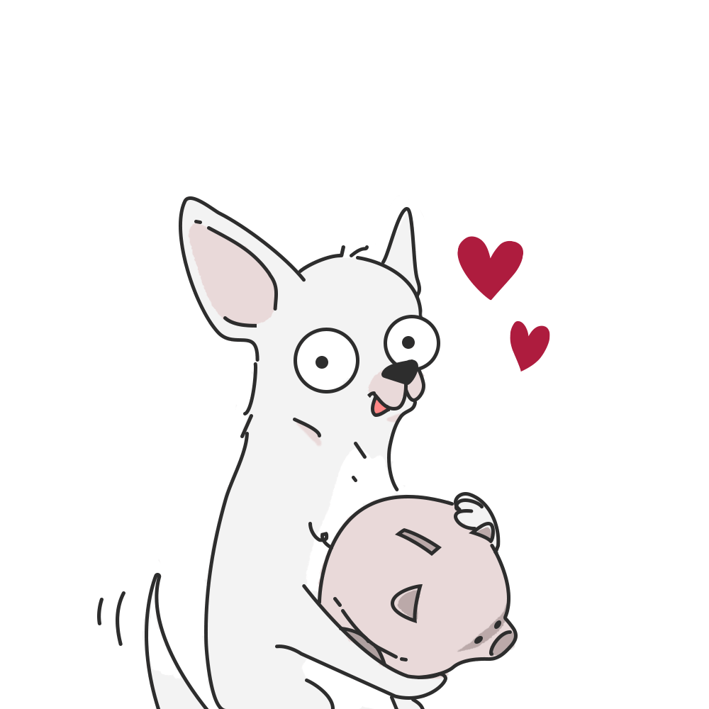 chihuahua bianco con salvadanaio