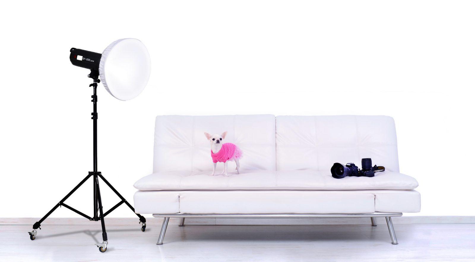 Chihuahua bianco sul divano Shadowplaystudio